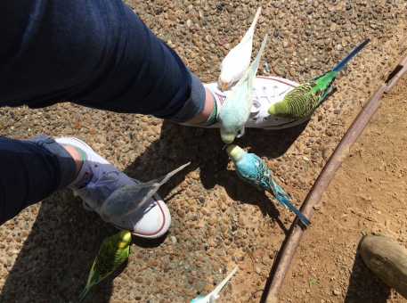 birds on shoes