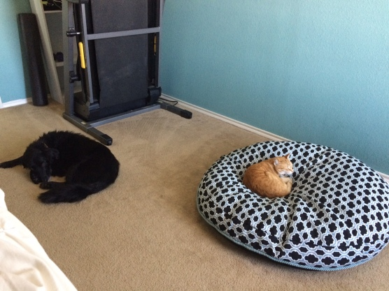 cat on a dog bed