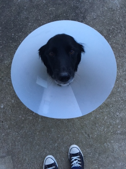 Cone of Shame.JPG